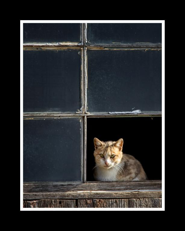 Maker: Debbie Abraham Entered in: 2012 May Competition - A Prints Score: 34 points  1st PlaceJudge's comments: Good placement of subject and very sharp; translucent glass makes the cat really stand outMaker's comments: