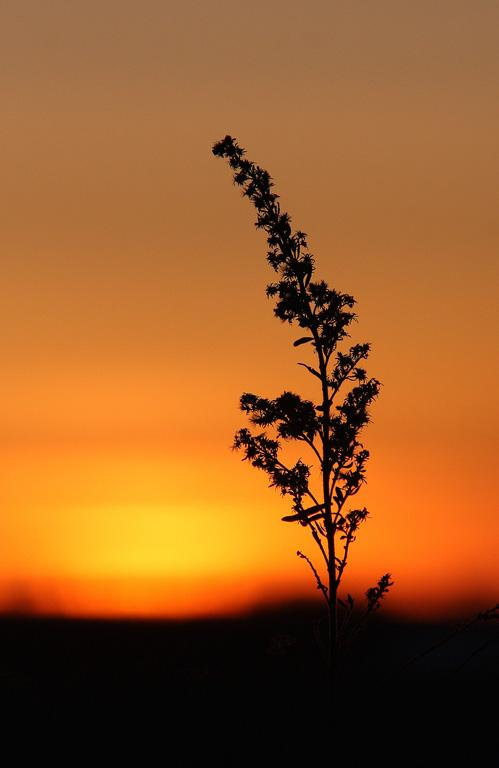 A - Nature Maker: Kristi Olson  -- 29 points      Judge's comments: Good composition and very nice sunsetMaker's comments: