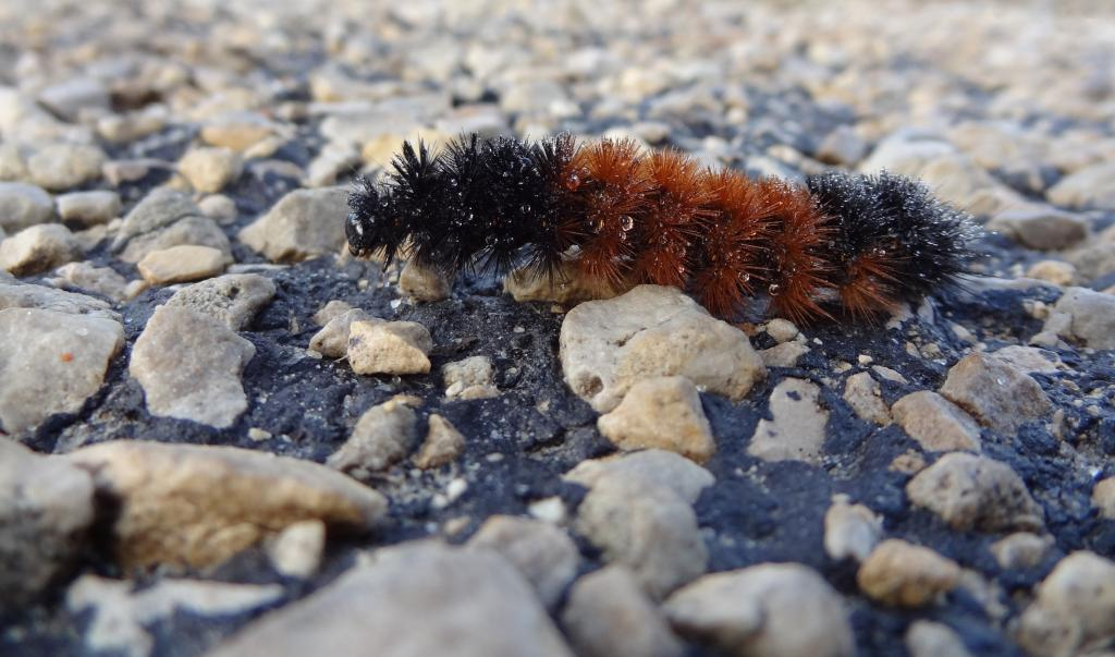 Maker: Wanda Finn  -- 26 points      Judge's comments: Nice close-up; like the water droplets on the caterpillar; would crop in on him eliminating soft rocks in foregroundMaker's comments: