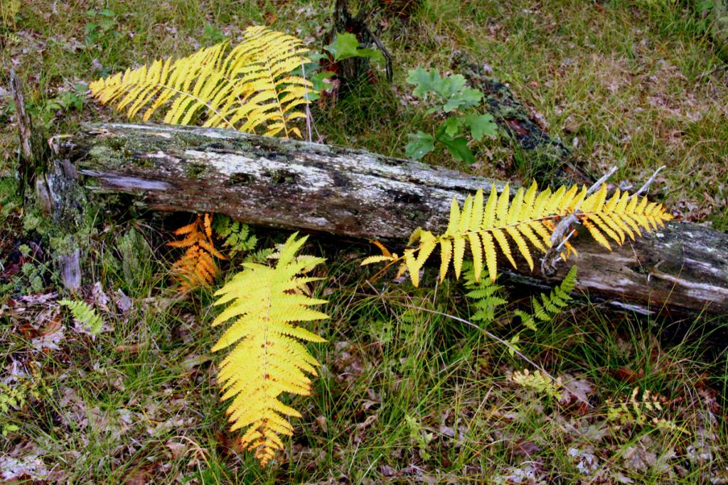 Maker: Doyle Gates  -- 28 points      Judge's comments: Very pleasant image; red fern is a great touch; yellows seem a little brightMaker's comments: