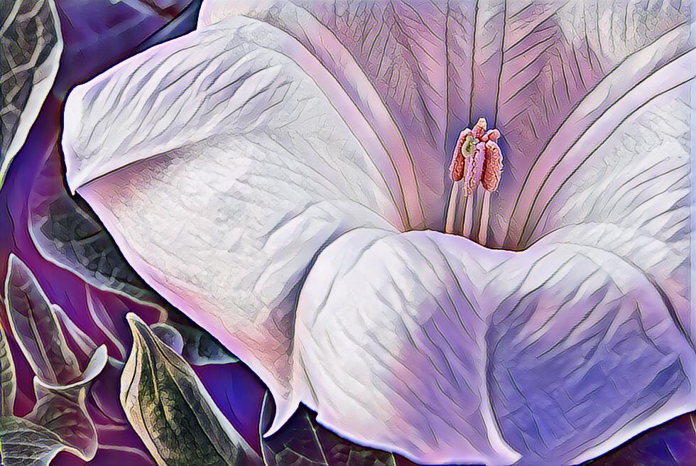 A - Creative Maker: Rachel Teske  -- 33 points  3rd PlaceJudge's comments: Great composition; image pops; petals and leaves provide a frame; sharpMaker's comments: