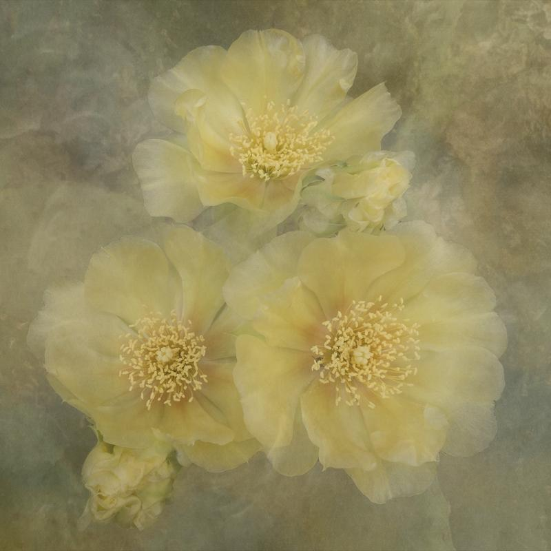 A - Creative Maker: Sue Retzlaff  -- 35 points  2nd PlaceJudge's comments: Dreamy look; nice mood and colors; centers of the flowers are sharpMaker's comments: