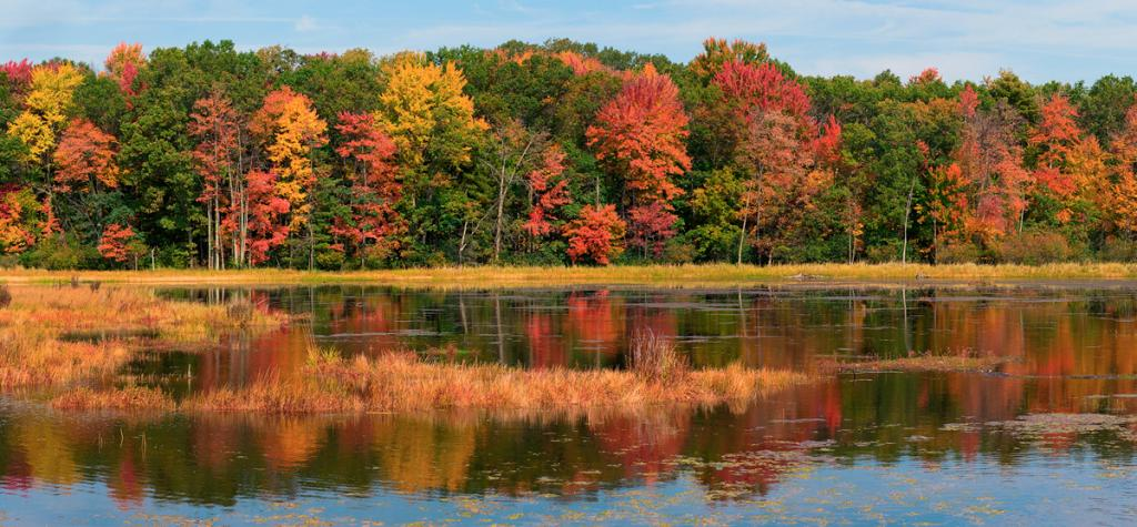 A - Nature Maker: Debbie  -- 29 points  Voted Acc.Judge's comments: Pretty scene with every fall color; lovely reflection; grassy area adds to image; sharpMaker's comments: