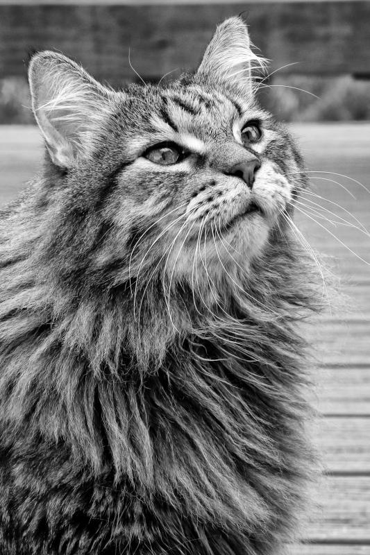A - Prints Black and white printsMaker: Brandon Wanke  -- 30 points      Judge's comments: Beautiful angle and expression; great detail in the fur and whiskers; good depth of fieldMaker's comments: