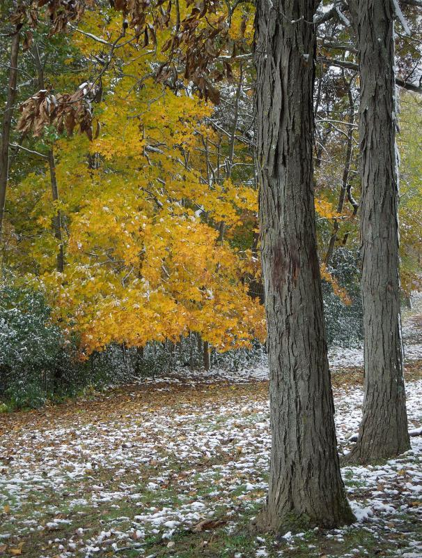 A - Prints Color printsMaker: John Zoerb  -- 30 points  Voted Acc.Judge's comments: Lovely fall scene; sharp front to back; the snow adds much interestMaker's comments: