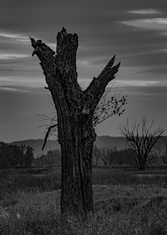 Maker: Kevin Millard  -- 28 points  3rd PlaceJudge's comments: Good detail in the tree; interesting sky; good impact; fog in the background; sharp where it needs to be; perhaps just a touch darkMaker's comments:
