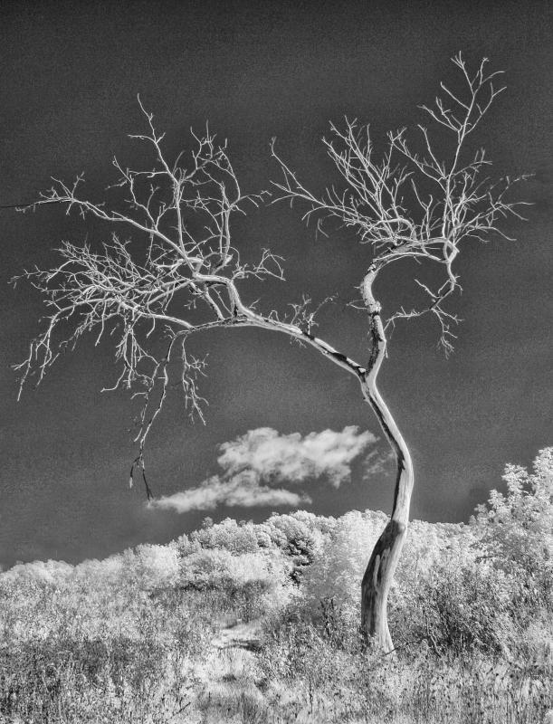 Maker: John Zoerb  -- 30 points      Judge's comments: Simplicity; infrared creates very dense blacks giving the image a harsh feelMaker's comments: