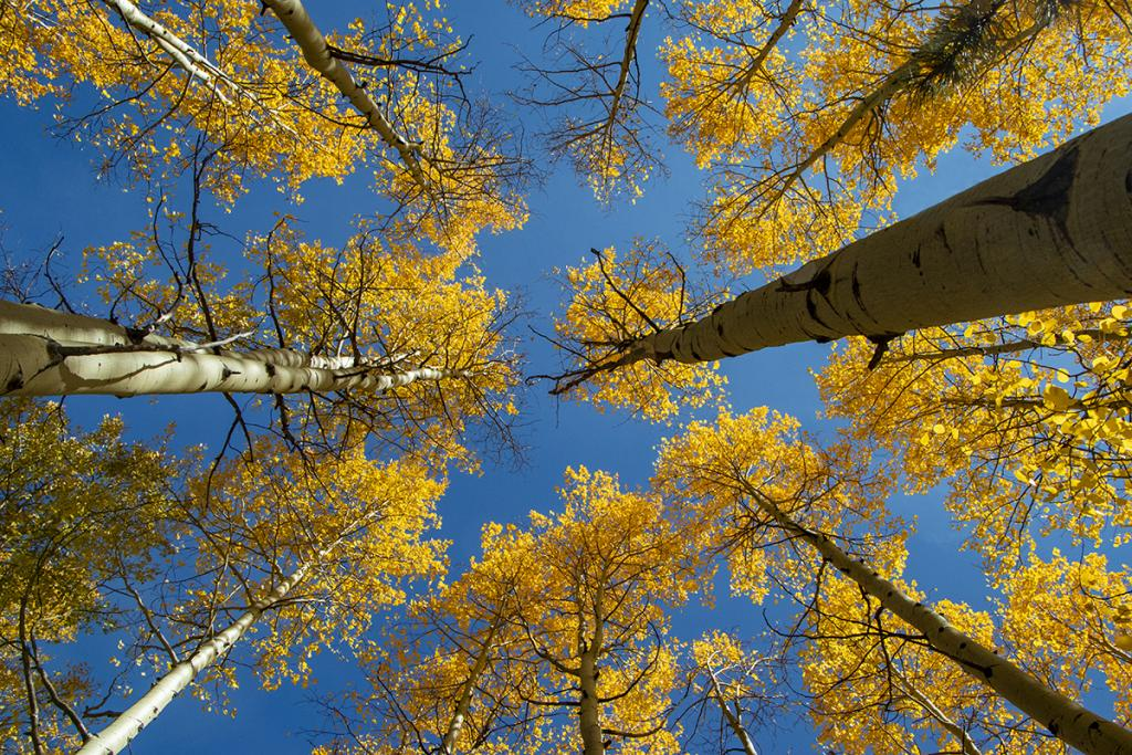 Maker: Brian Narveson  -- 35 points  1st PlaceJudge's comments: Nice color and exposure; plain blue sky is a great background; sharp; has a circular feelMaker's comments: Image was taken on the road up to the top of Pikes Peak near Colorado Springs.  Camera was handheld with an 18mm lens.  Mode was aperture priority set at f/10 for depth of field.  I used ISO 800 to get a fast enough shutter speed for handheld.  Resulting speed was 1/640 sec.
