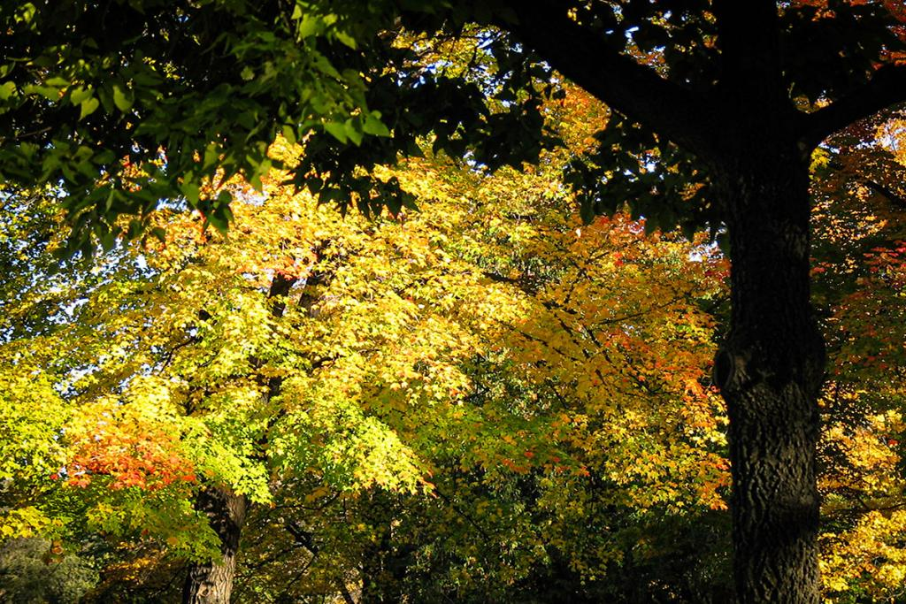 Maker: Mary Ann Roesler  -- 25 points      Judge's comments: Nice fall foliage; some pretty colors; might focus on a smaller area of the image; the right side could have been a verticalMaker's comments: