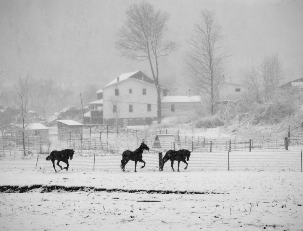 Maker: John Zoerb  -- 29 points      Judge's comments: Beautiful use of black and white; nice atmospheric effect; all the horses are active and well-placed in the imageMaker's comments: