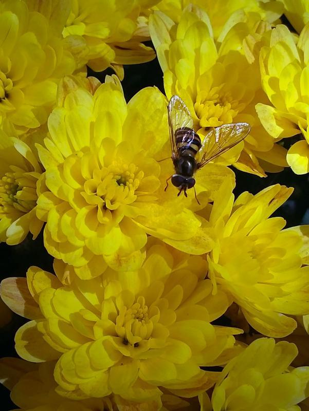 Maker: Cyndy Thorn  -- 34 points  Hon. MentionJudge's comments: Yellow well-handled; good placement of the fly; very sharpMaker's comments: Cell phone photo