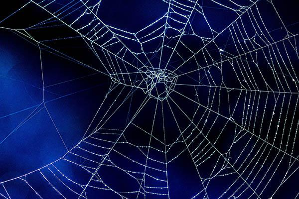 Spider web on blue